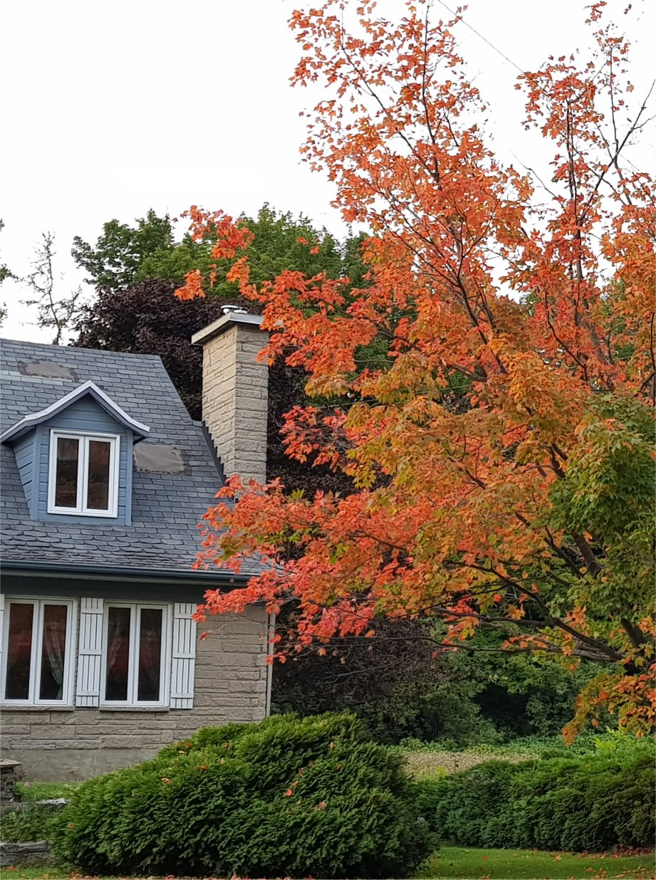 Red Foliage on Orléans Island, Quebec in autumn