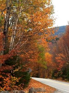 Gold foliage in New Hampshire autumn