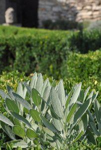 גינה מהצומח - צמחי מאכל ותבלין - A herbal garden